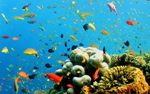 Bountiful Marine Life Seen During a Scuba Diving Trip in Malaysia