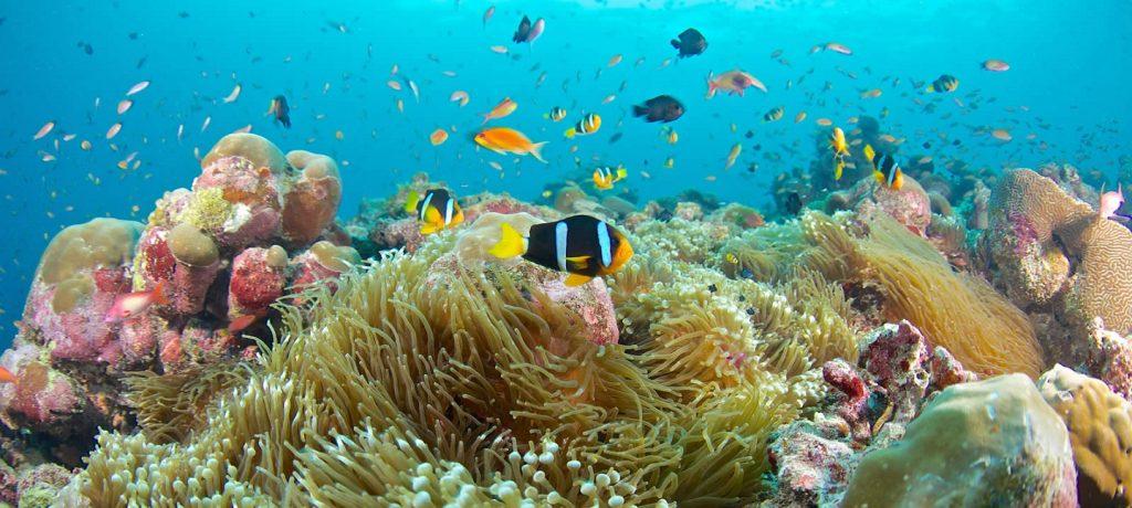 Healthy corals at Redang Island