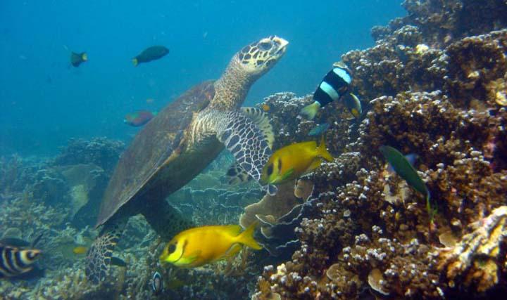 Snorkeling in Tioman Island