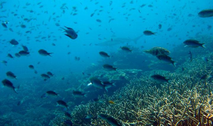 Scuba diving in Tioman Island