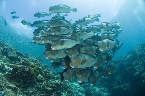 A school of fish seen while scuba diving in Malaysia