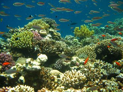 Thriving coral reefs in Tioman Island