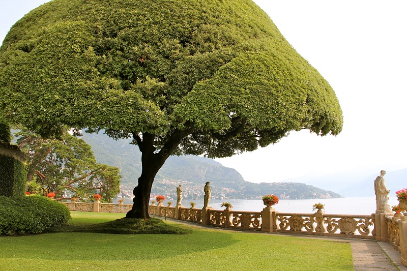 VILLA DEL BALBIANELLO UMBRELLA TREE